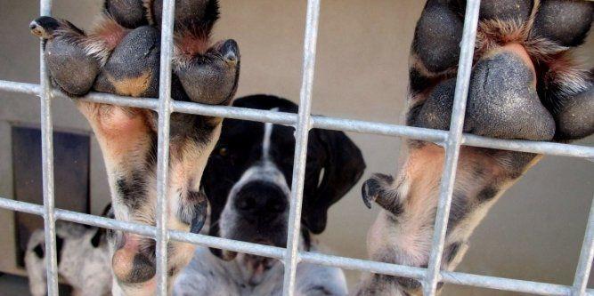 Espagne : la présidente d'un refuge aurait tué 2 000 chiens et chats