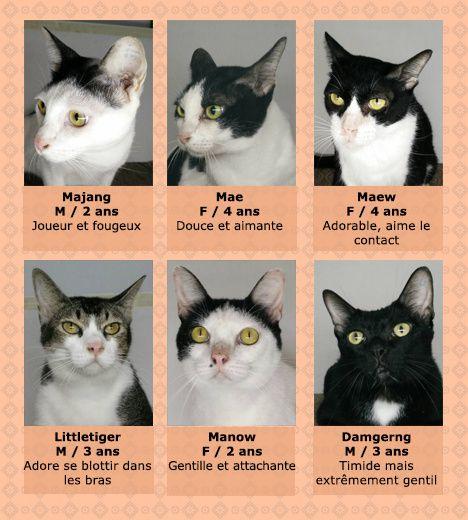 Sauvés d'un trafic révoltant par la Fondation Bardot, ces 6 chats cherchent une famille