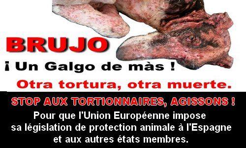 JUSTICE POUR BRUJO ! STOP AUX TORTIONNAIRES D'ANIMAUX !