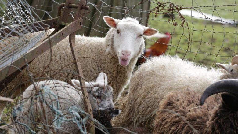 Une centaine de poneys, moutons et brebis sauvés par la fondation Brigitte Bardot et 30 millions d'amis