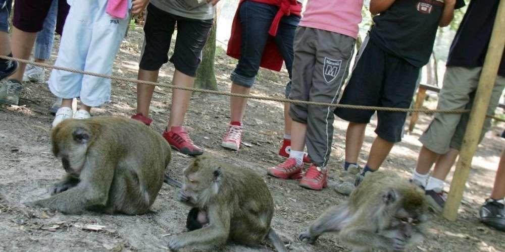 La Pinède des singes était une attraction touristique unique sur la Côte sud des Landes.