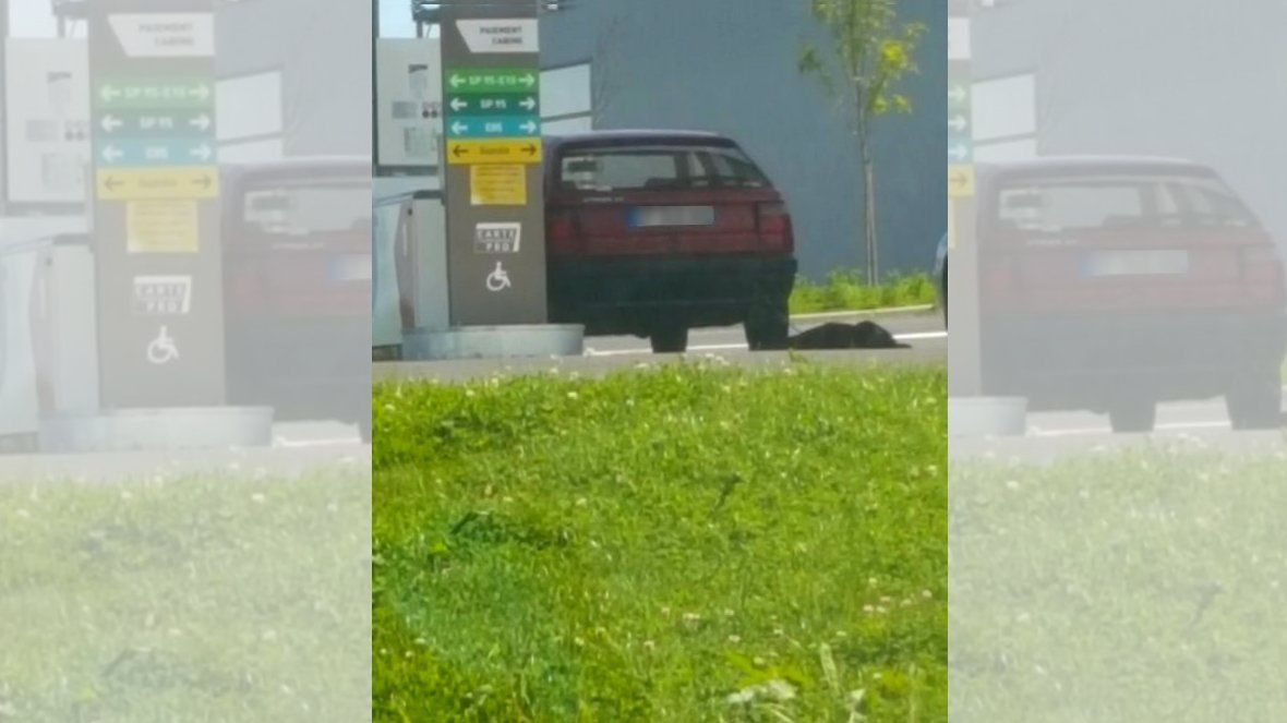 Ardennes : un homme interpellé après avoir traîné son chien attaché à l'arrière de son véhicule