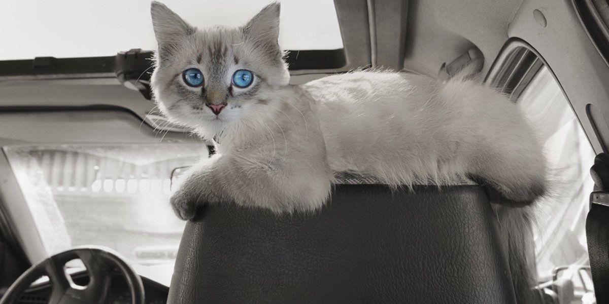 Henri a vécu 3 mois avec ses 13 chats dans une voiture.Photo d'illustration