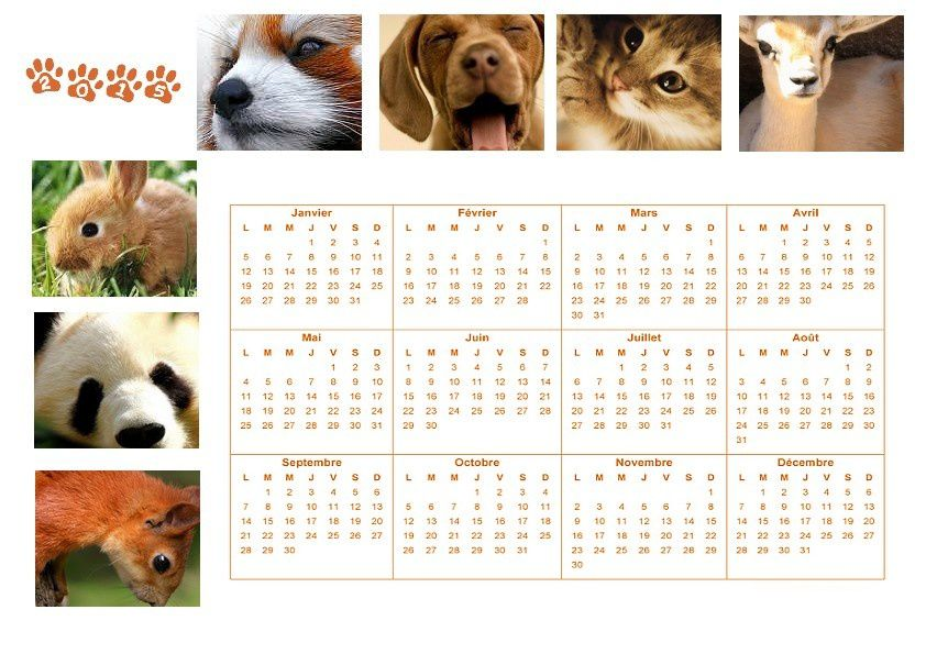Calendrier Animaux.Calendrier Annuel Animaux