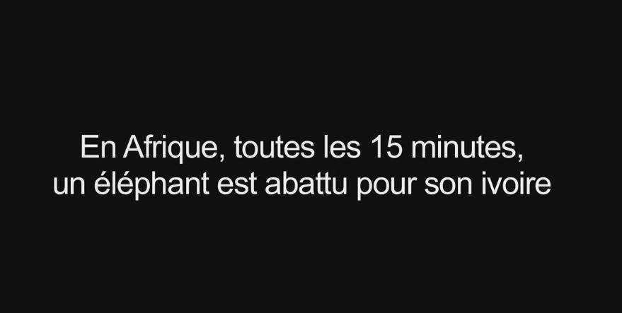 A ne pas manquer dimanche, 13h15 : Mémoires d'éléphants 2, le trafic (Vidéo volet 1).