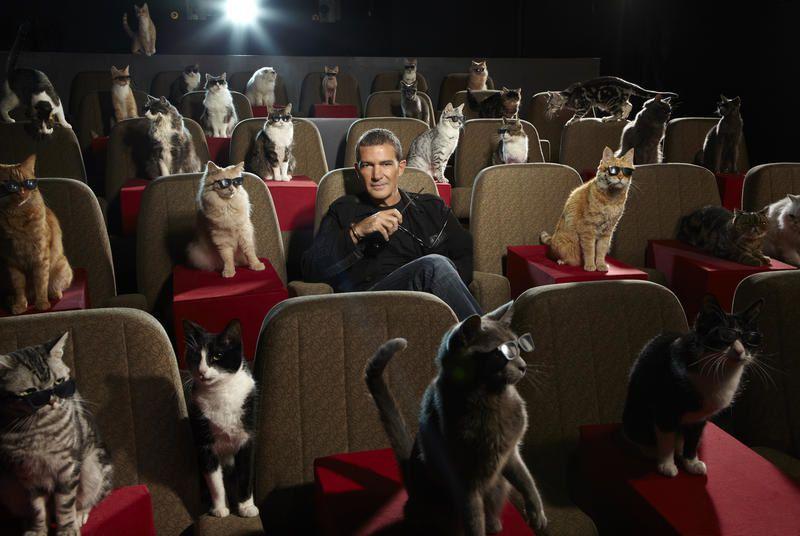 Inédit en clair, le film animé Le chat potté diffusé le 26 octobre.