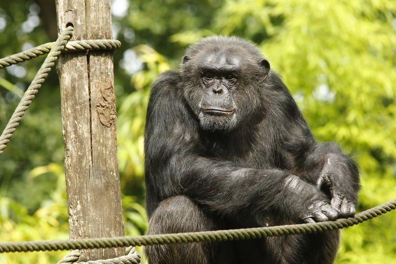 Une saison au zoo de La Flèche : Saison 4 dès ce 30 août sur France 4.