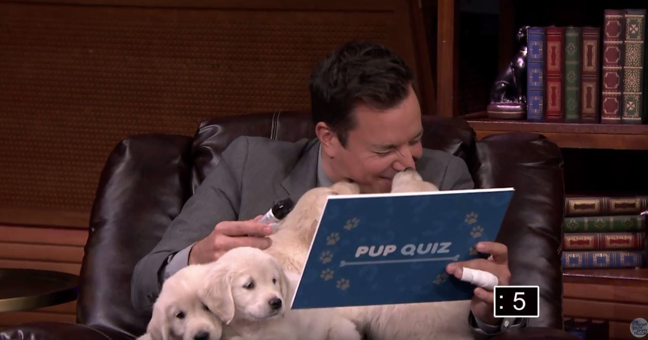 Le Pup Quiz avec Jimmy Fallon et ses attendrissants &quot&#x3B;guests&quot&#x3B;.