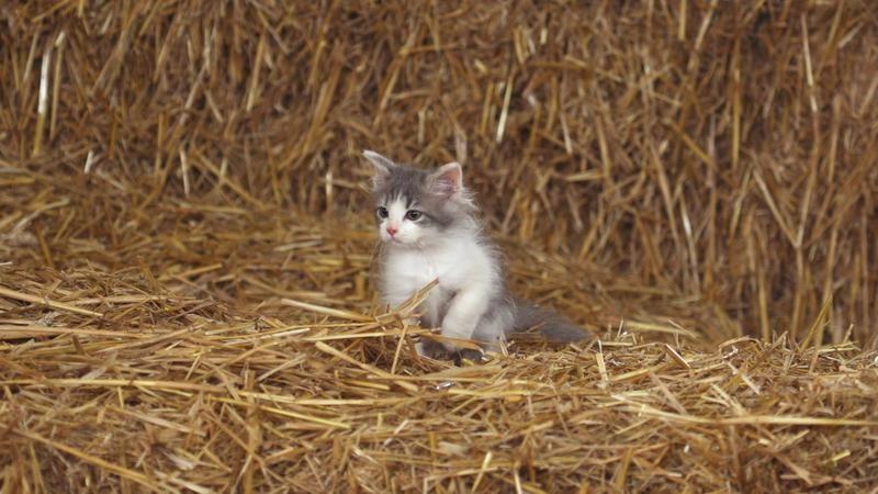 Documentaire inédit ce dimanche sur France 2 : &quot&#x3B;Trois petits chats.&quot&#x3B;
