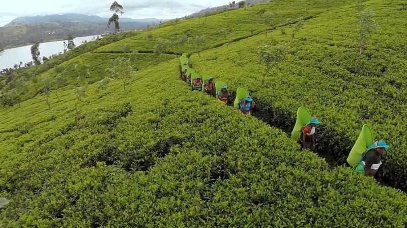 Océan Indien : la nouvelle vie du Sri Lanka ce vendredi dans Thalassa.