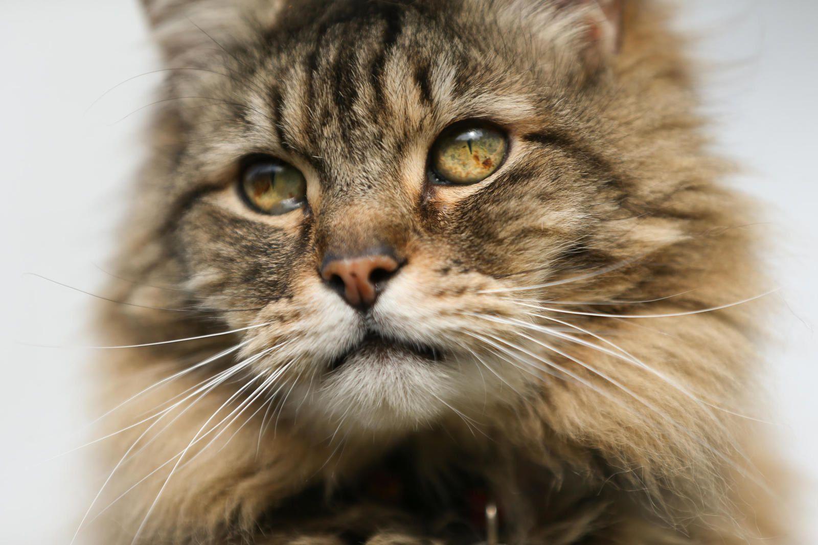 Soirée spéciale Chats des villes et chats des champs le 11 septembre sur  France 4.