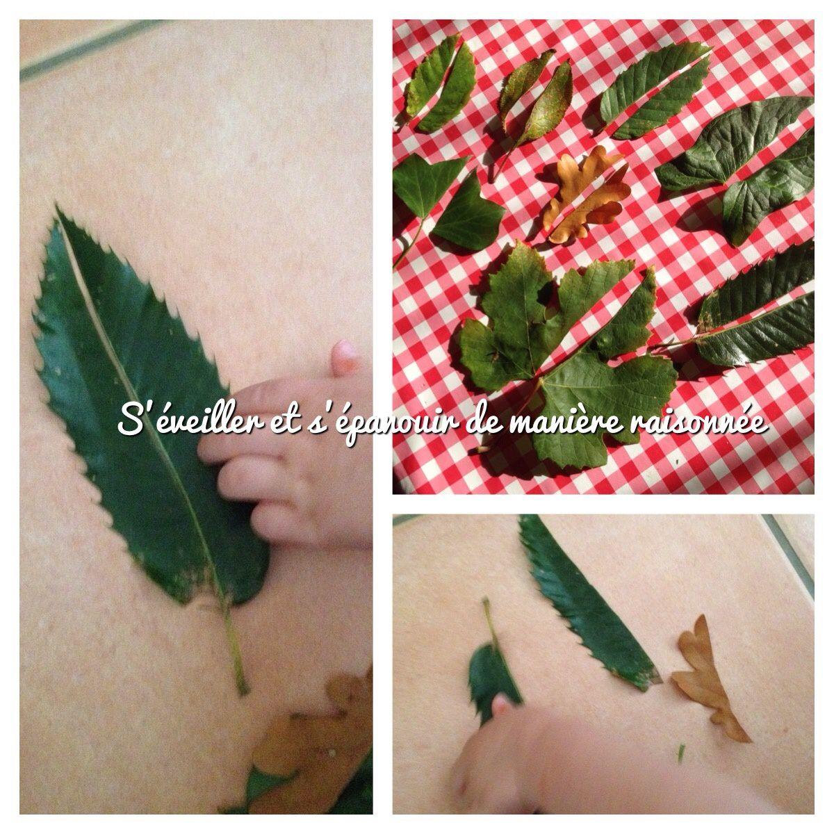 Idées d'activités automnales simples : Que faire avec des feuilles d'automne?