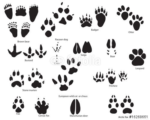 691dl6 furthermore How To Draw Foxes also Tribal Wolf Family Design 298429860 together with Tundra Animals Coloring Pages also 66. on arctic cat symbol
