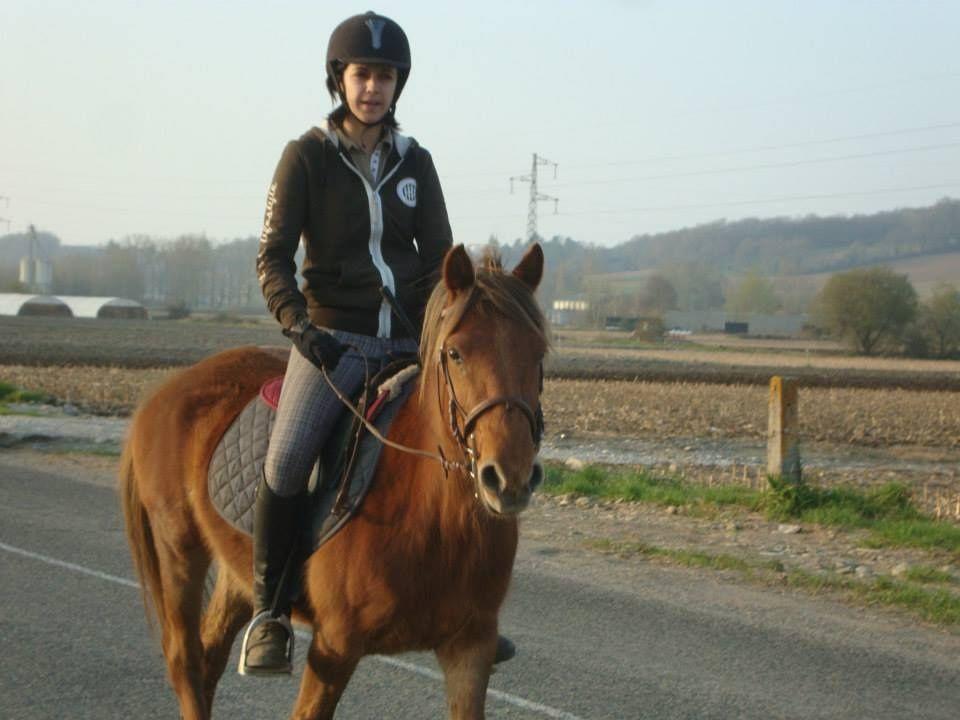 Il arrivent cette semaine depuis Les Mérens de la Gaoüt, élevage en Aquitaine 64.