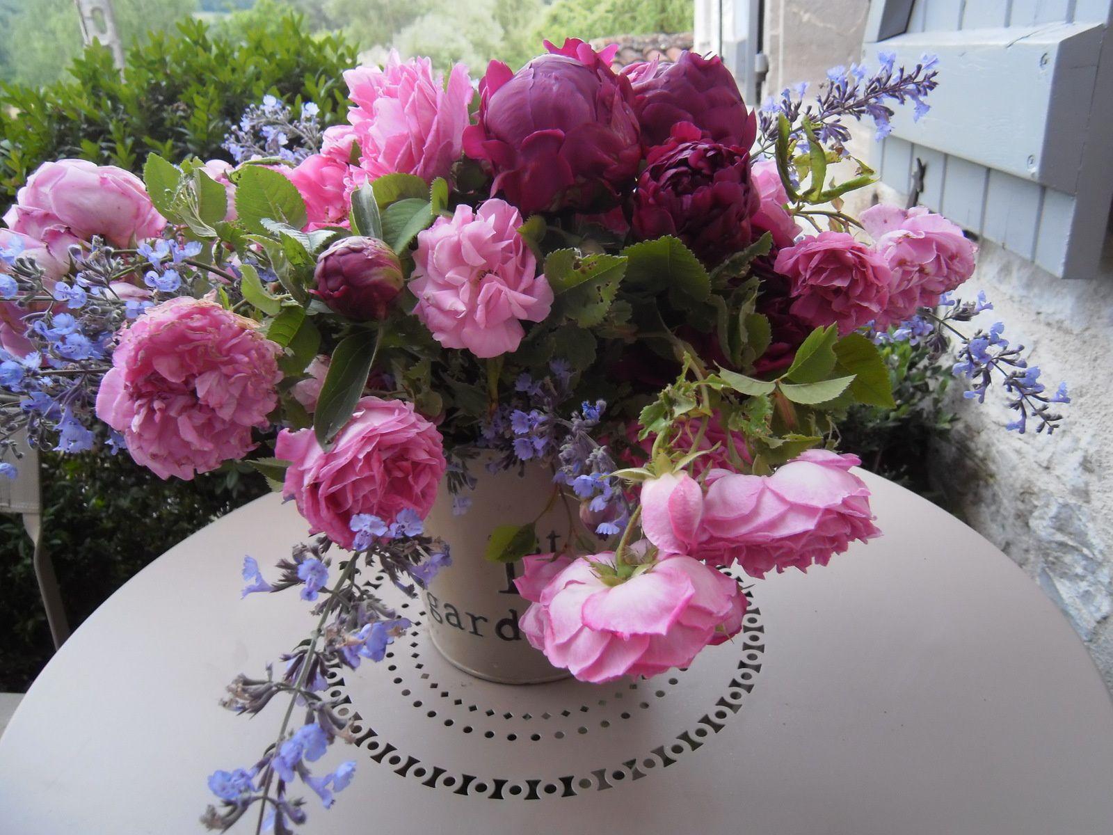 Au plus près des mes roses - Jardinage à Frescati