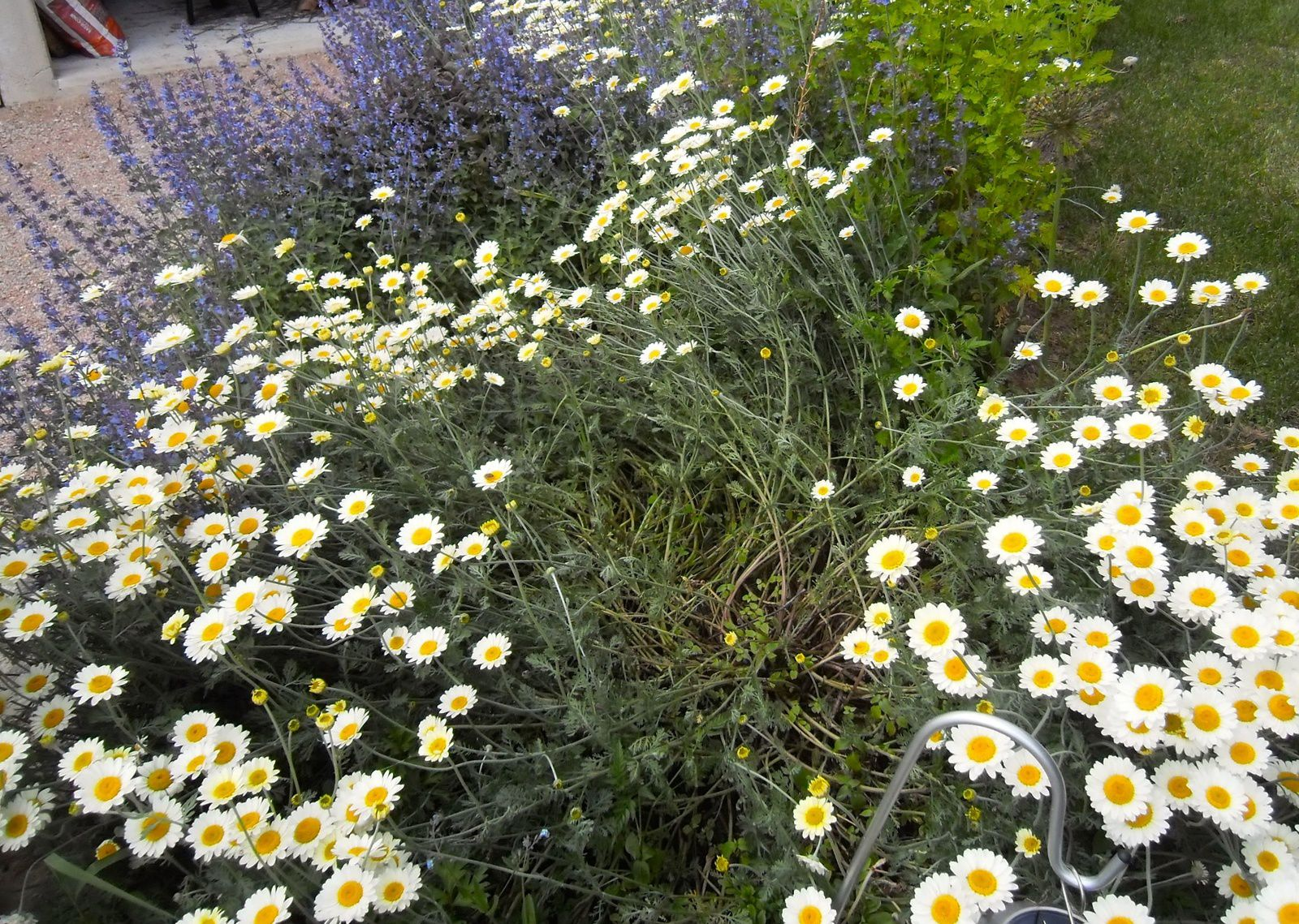 seeds of love 2016 : and the winners are - jardins merveilleux