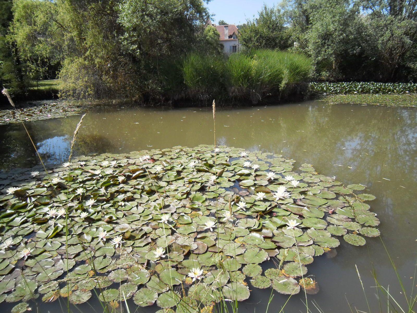 Etang du Jardin de Frescati