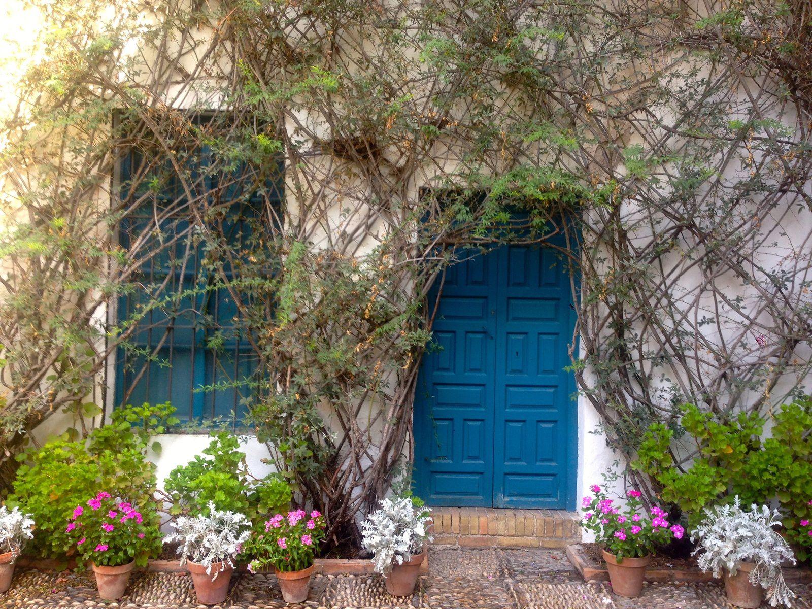 """Fenêtres et portes peintes dans le classique """"bleu Viana"""". Mur orné d'un rosier de Banks jaune."""