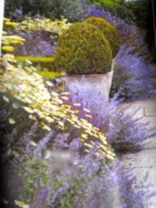 Un massif Florentin - Jardinage à Frescati