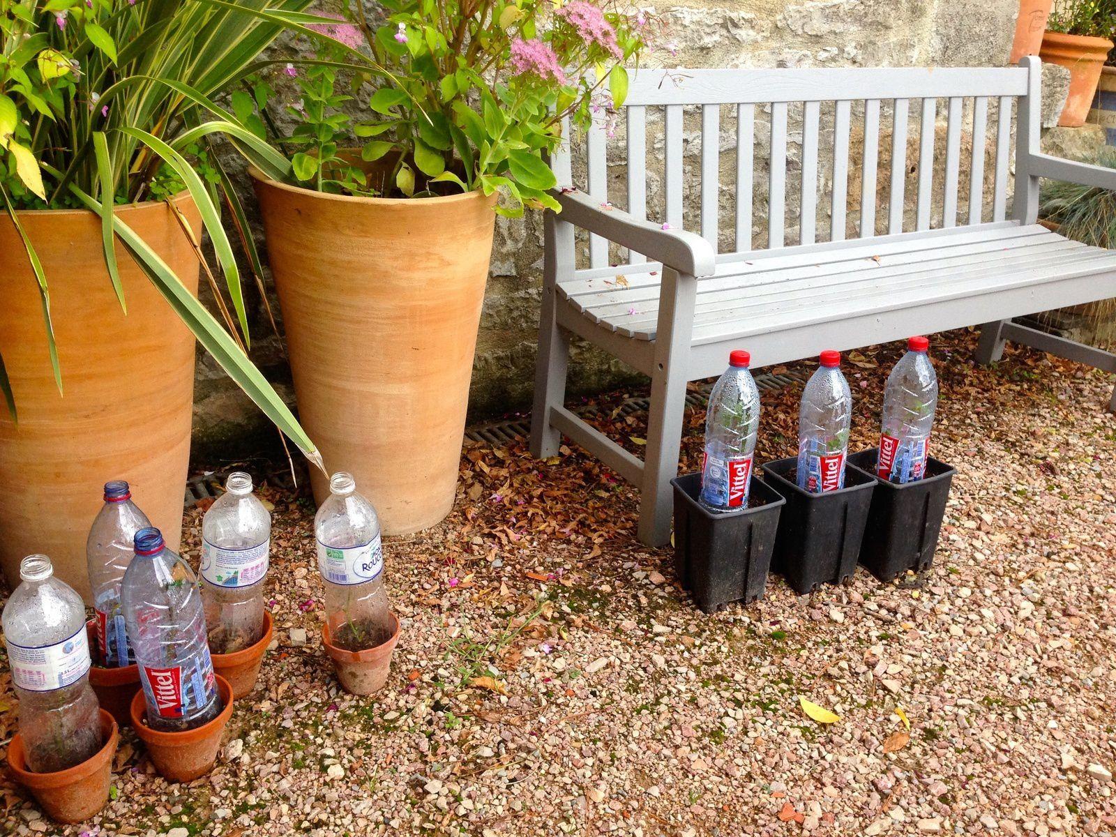 boutures de rosiers frescati jardins merveilleux. Black Bedroom Furniture Sets. Home Design Ideas