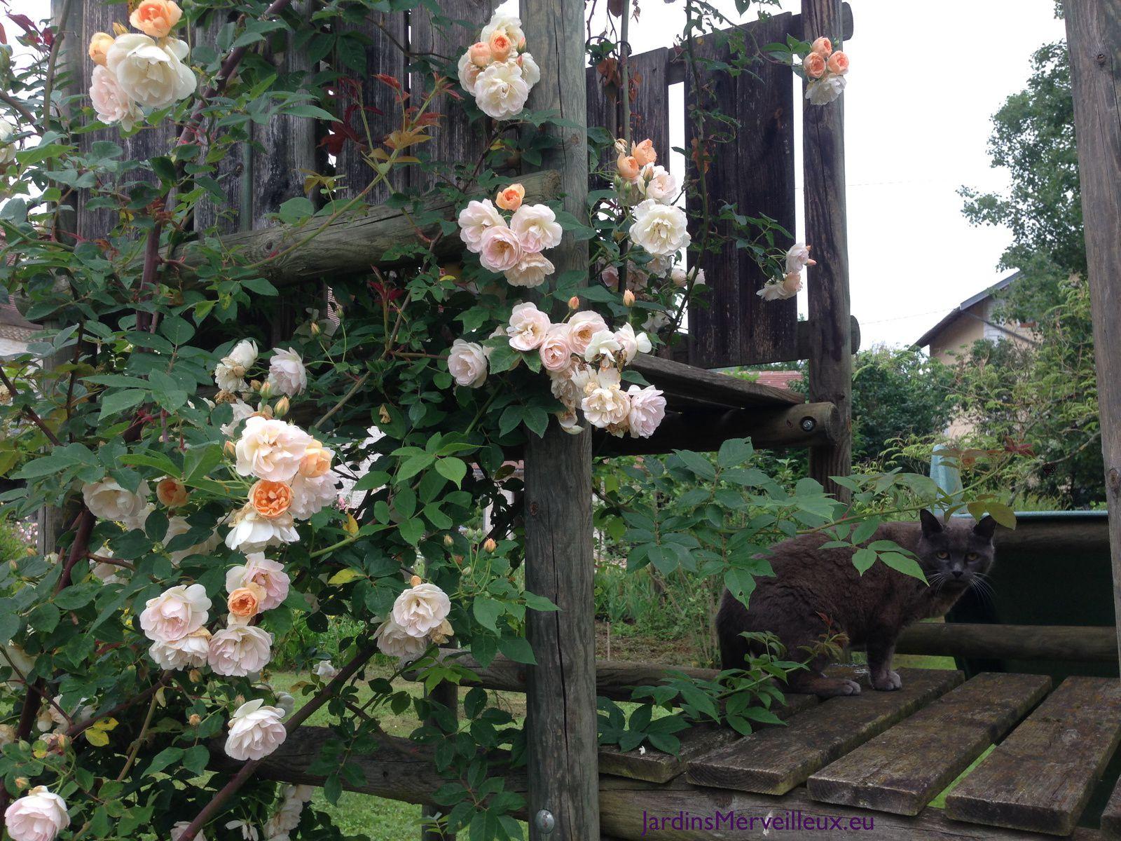'Treasure Trove' à l'assaut du portique au Jardin de Frescati