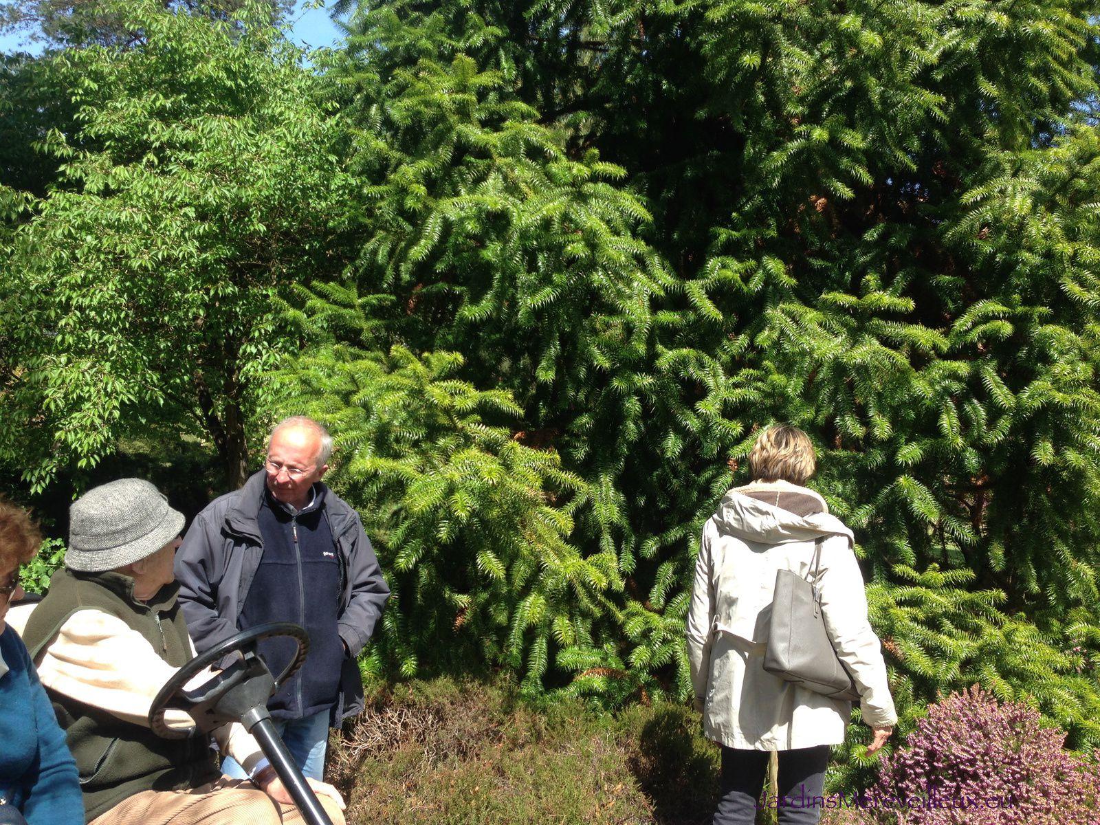 Comte de la Rochefoucauld à gauche sur la voiturette - Cunninghamia sinensis