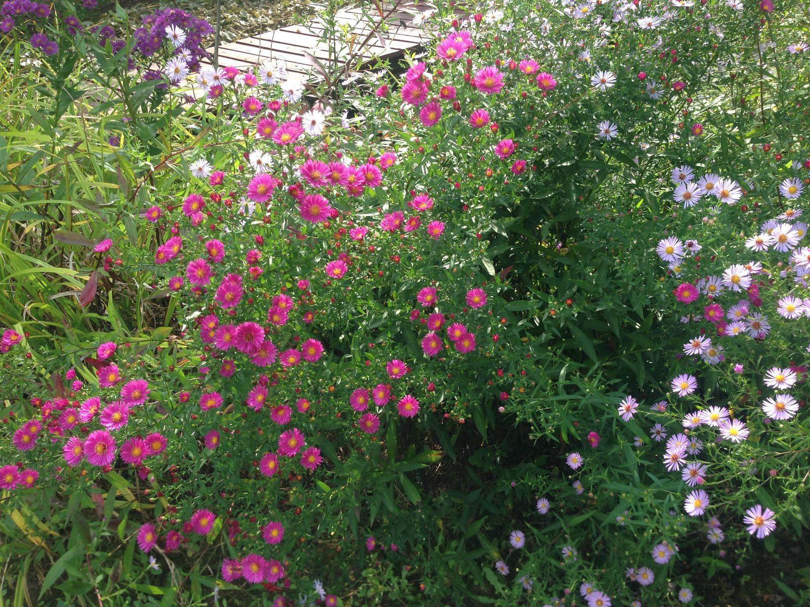 le bon coin jardinage 73 finest neufs les marches with le bon coin jardinage 73 perfect jardin. Black Bedroom Furniture Sets. Home Design Ideas