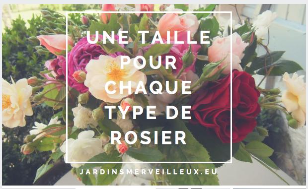 une taille pour chaque type de rosier jardins merveilleux. Black Bedroom Furniture Sets. Home Design Ideas