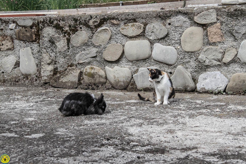 Le lapin Nain, après l'abandon , la vie en colocation et un peu de liberté