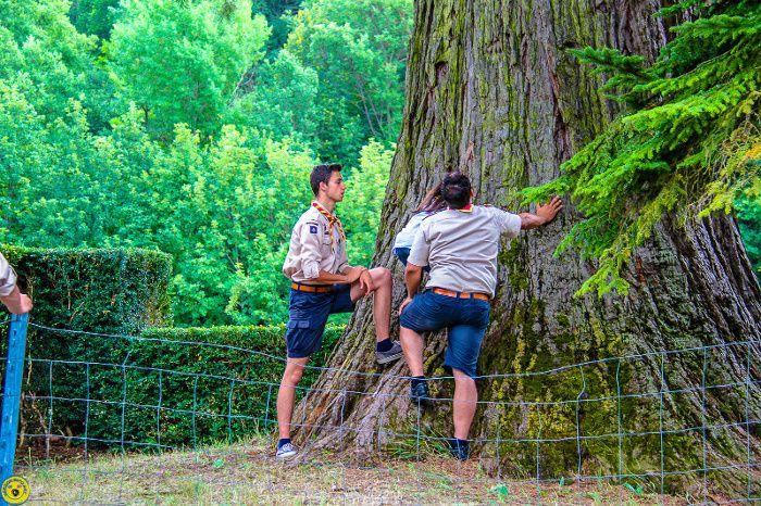 Barrême :  Le sequoia le plus grand de PACA