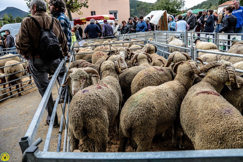 Saint André les Alpes : La foire agricole a pris possession du village
