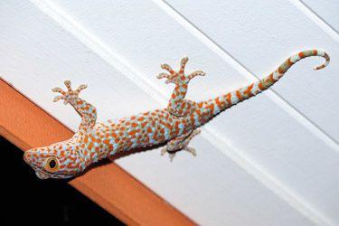 Grimper sur les murs comme les geckos