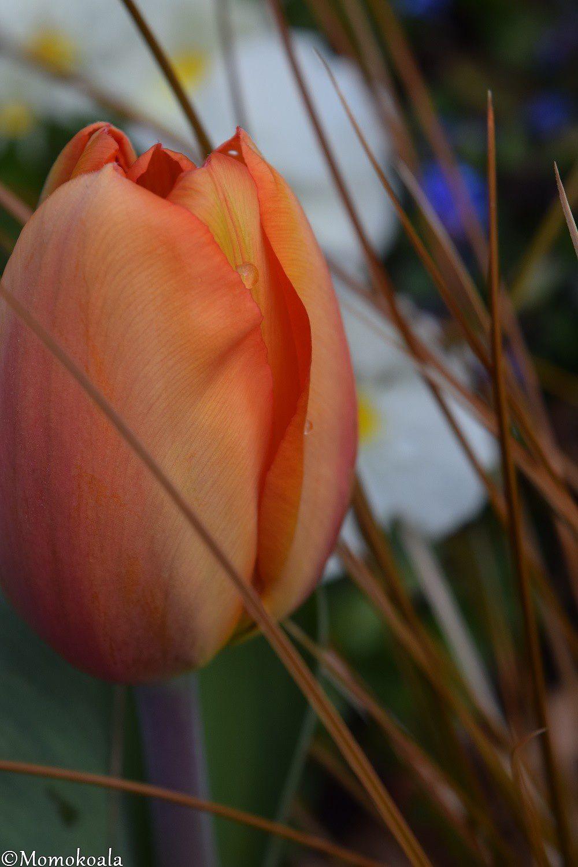 Jardin Des plantes (1/2)