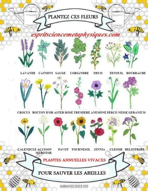 plantez ces fleurs pour sauver nos abeilles fdg de la montagne. Black Bedroom Furniture Sets. Home Design Ideas