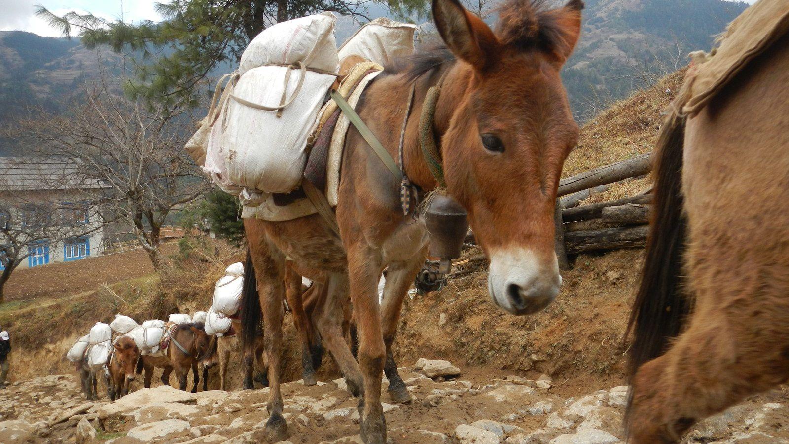 Trek Jiri - Tengboche - Jiri -- Quatrième jour