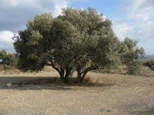 Israël s'accapare une vaste portion de territoire en Cisjordanie