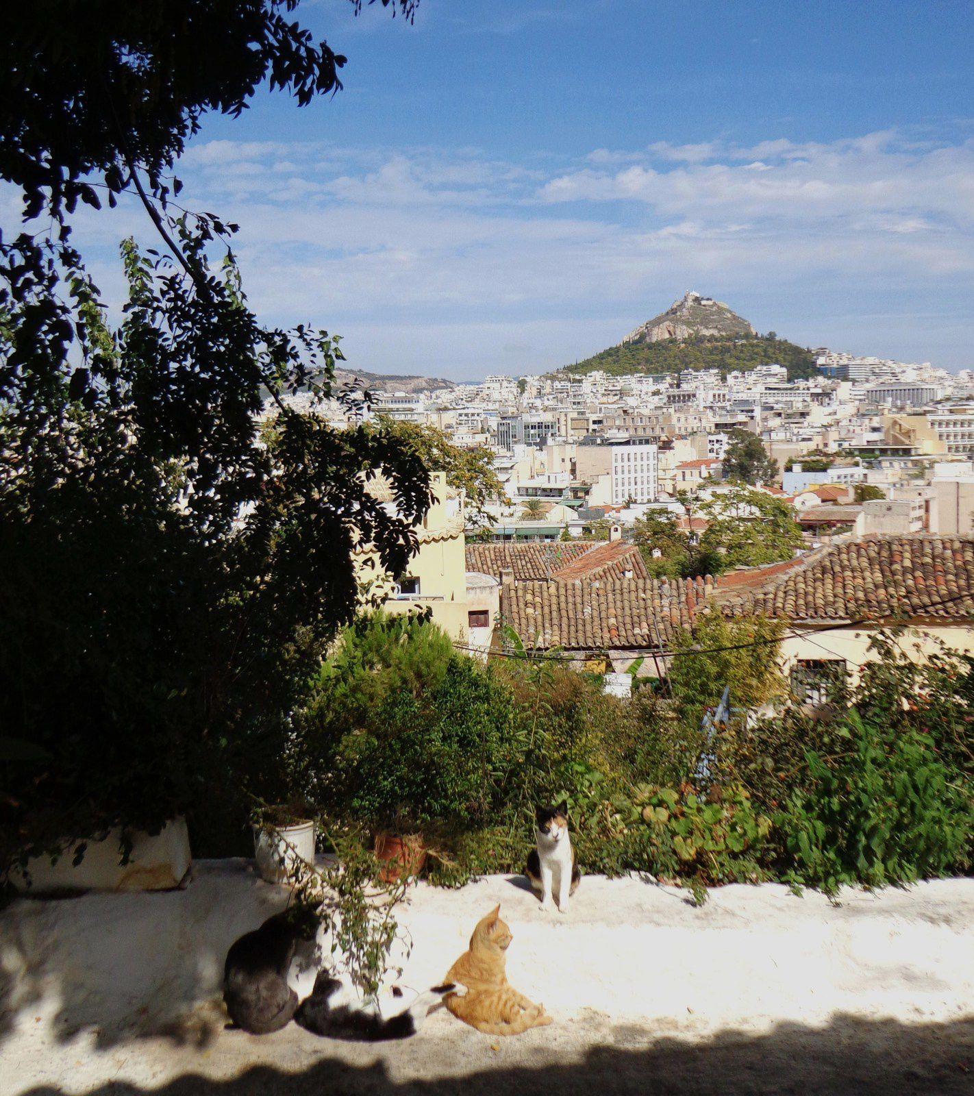 La faune à Athènes