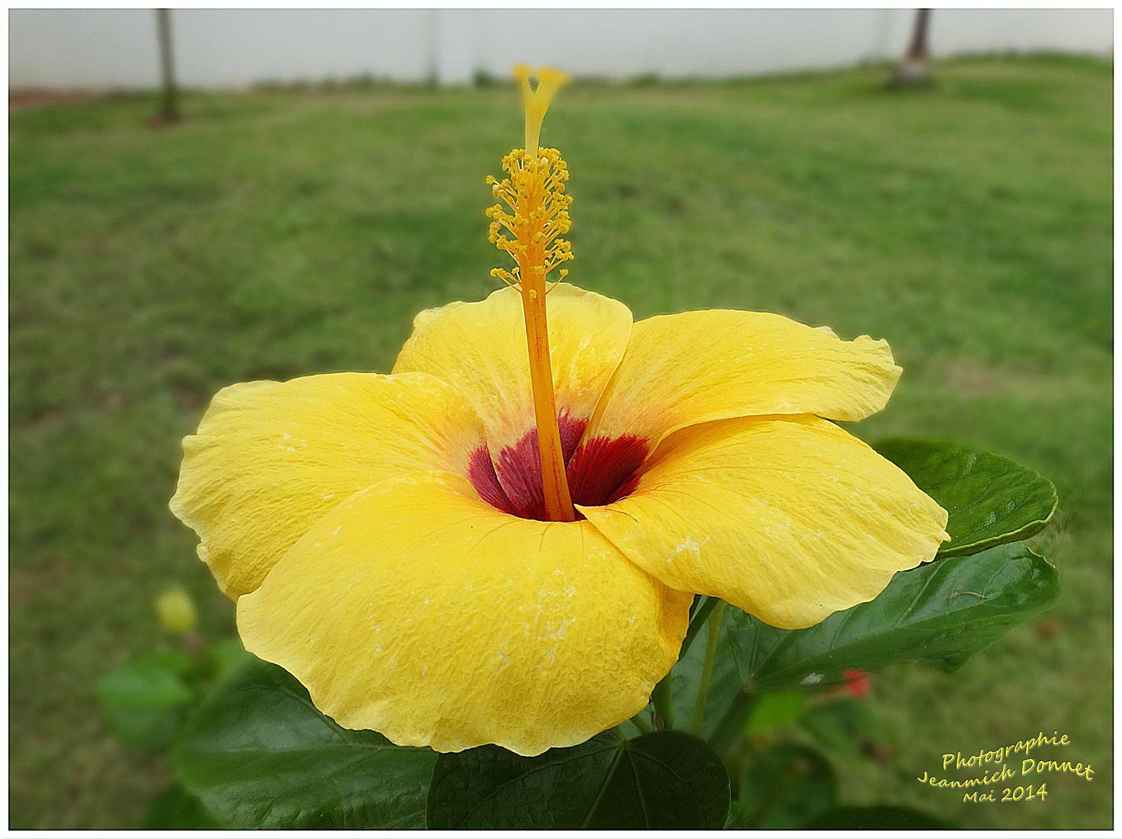 Fleurs et légumes de notre jardin en Thailande
