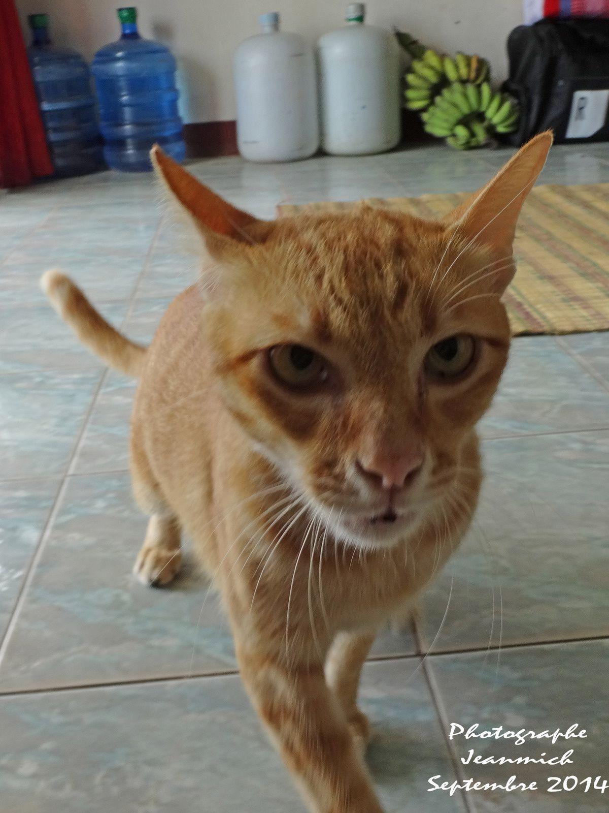 Retrouvailles avec notre chat Speedy...,