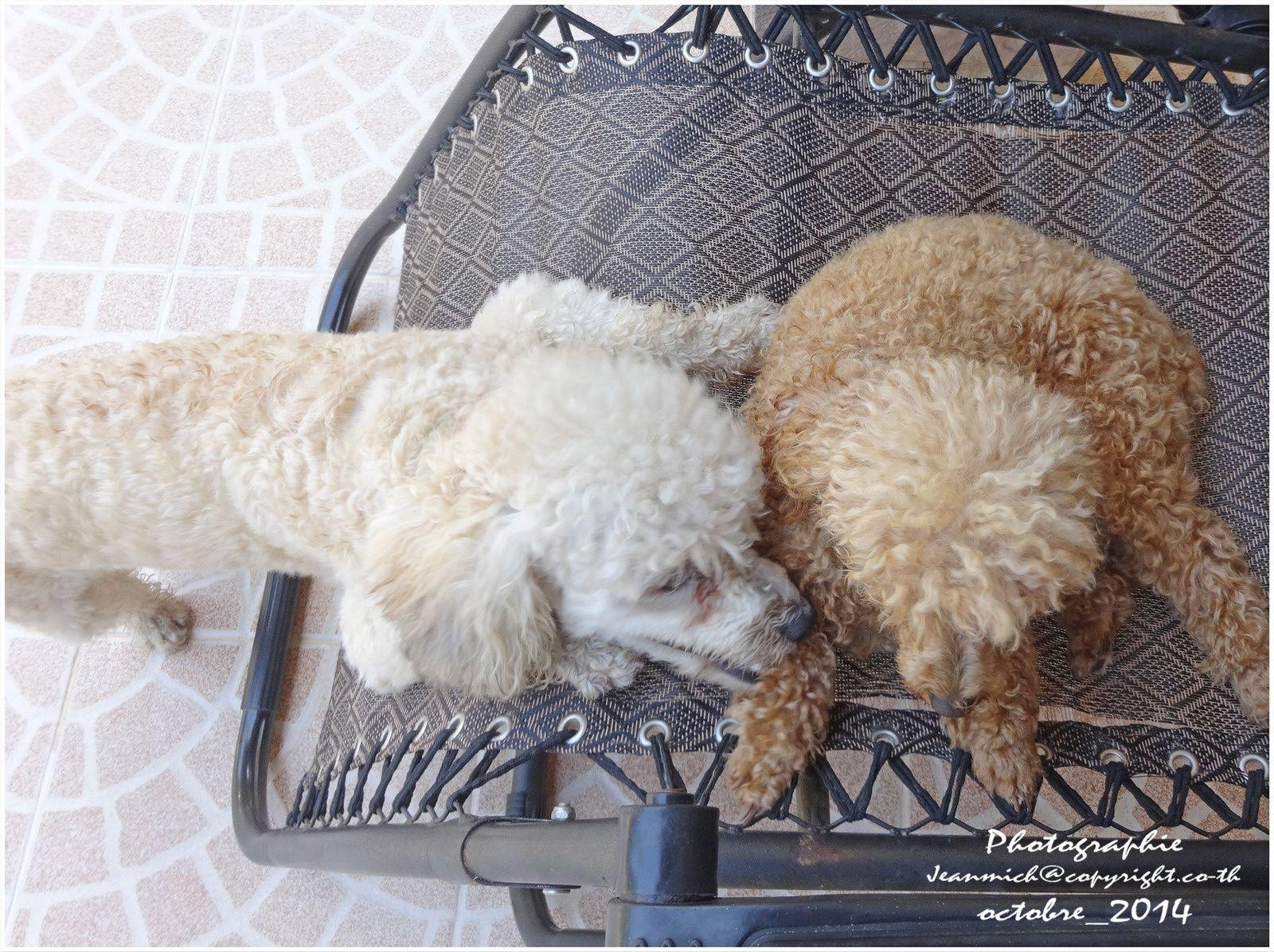 Les 2 amis Filou et Cookie.....