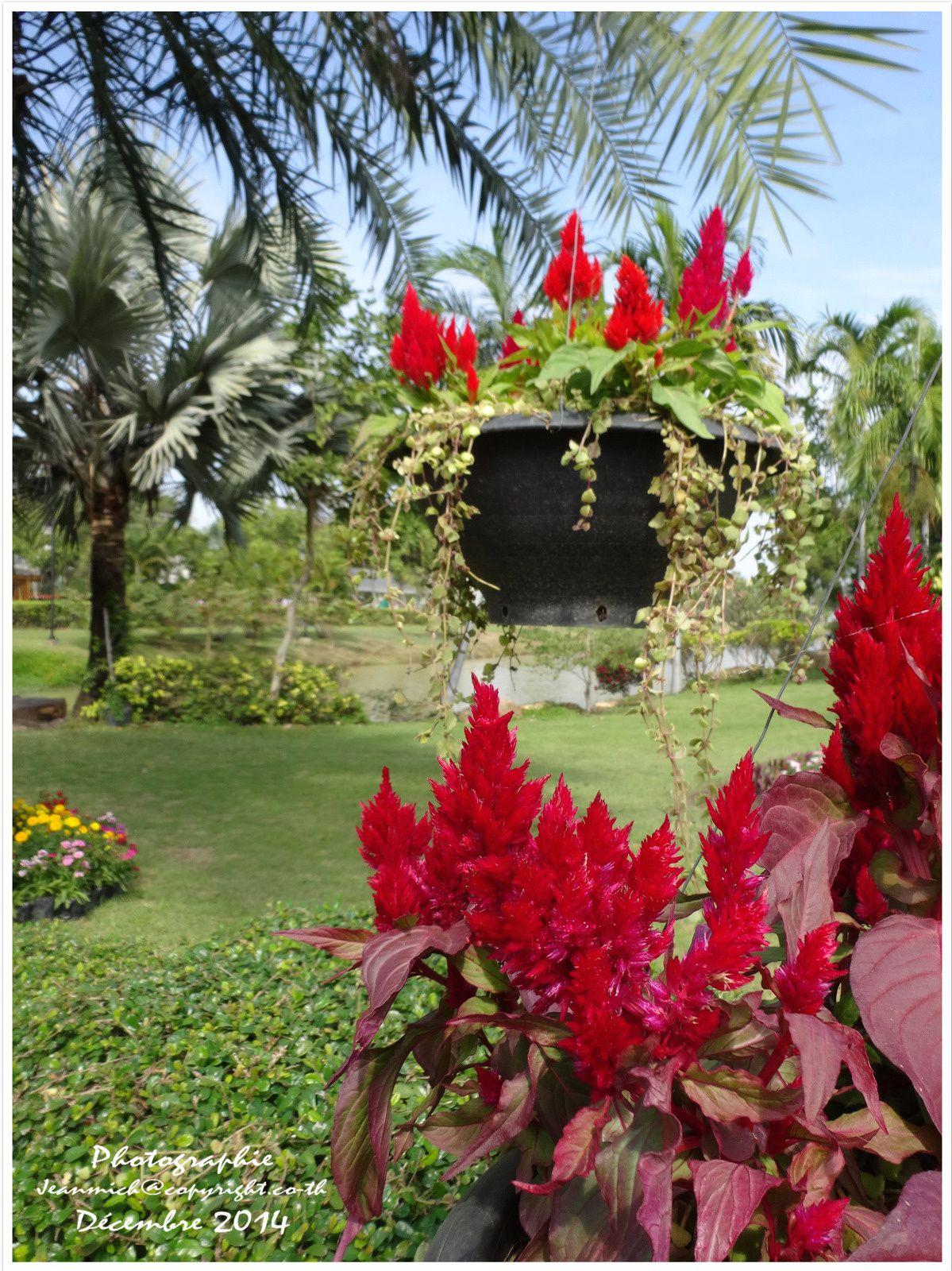 Les floralies de Khon Kaen (suite et fin de la visite)