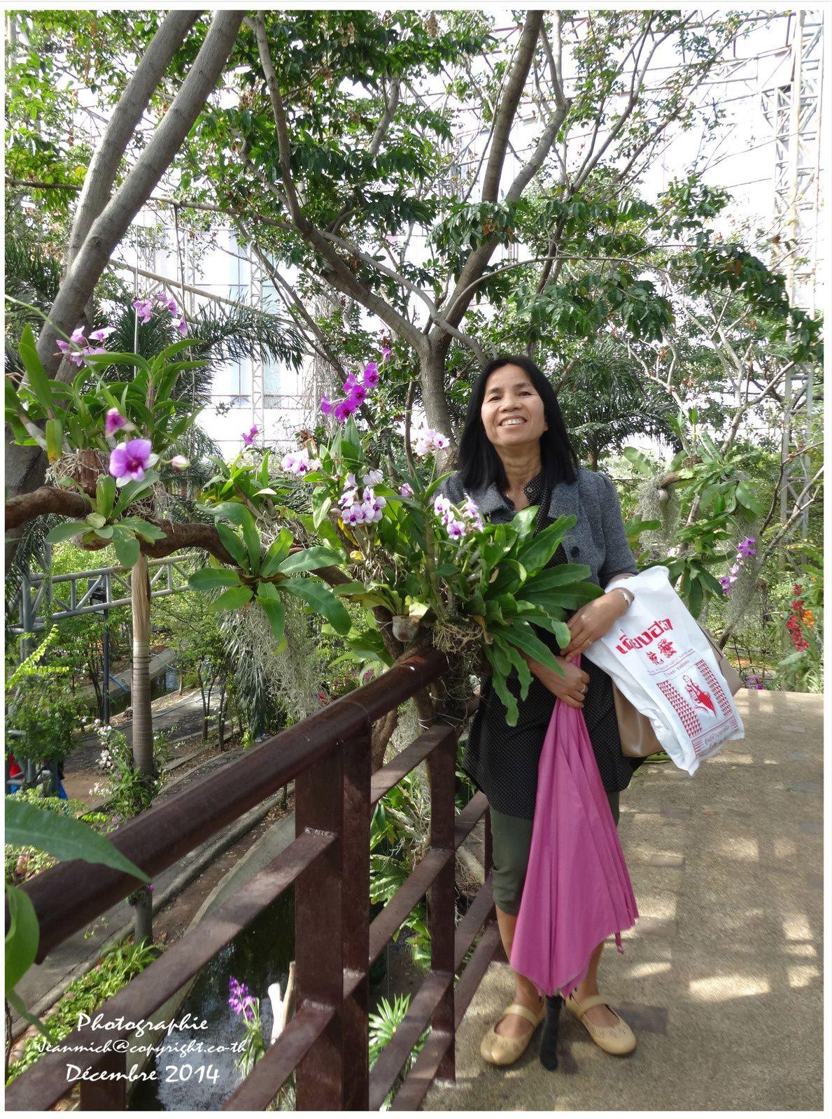 Les floralies de Khon Kaen (les orchidées et plantes d'ombre)