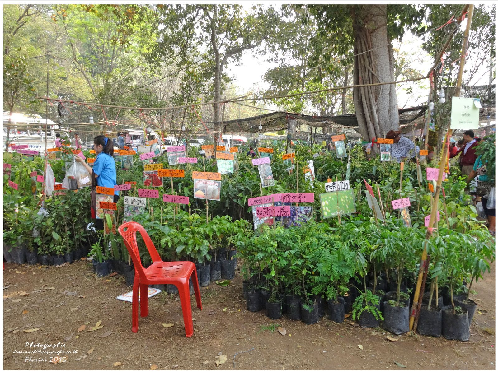 """La foire agricole de Khon Kaen """"les fleurs"""" (Thaïlande)"""