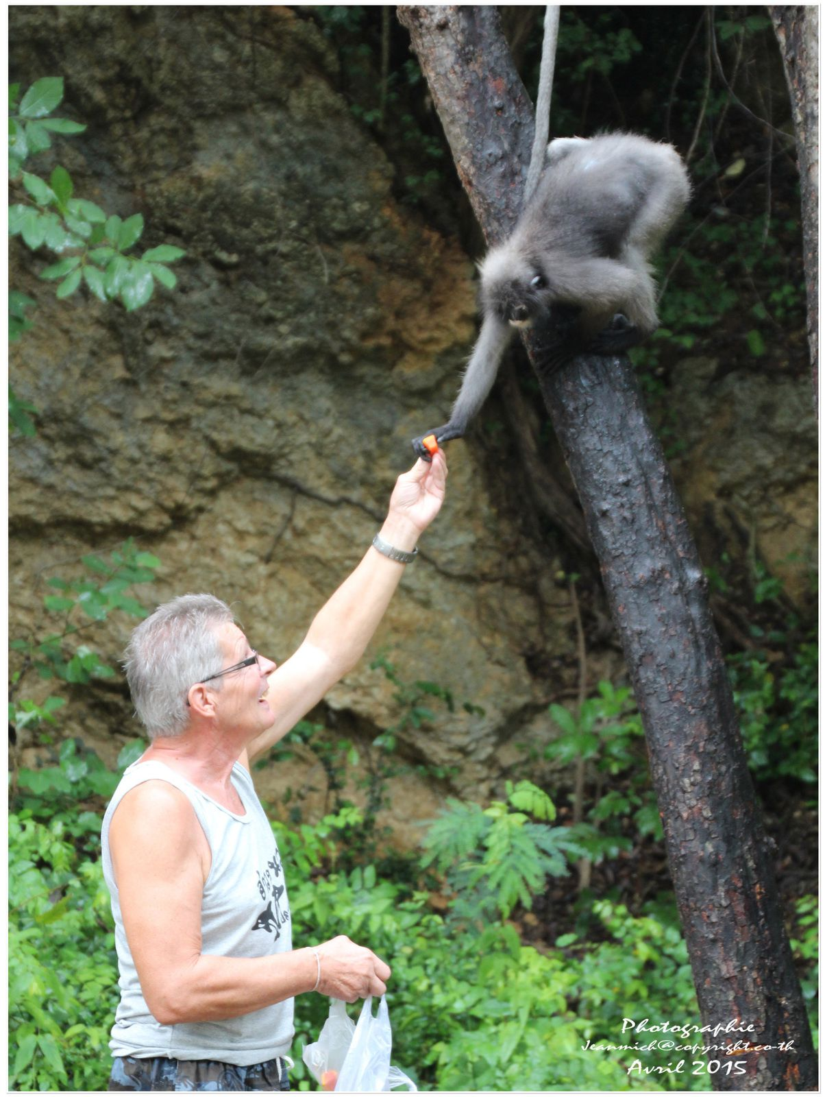 Visite des environs de Prachuap Kiri Kan..., les gibbons