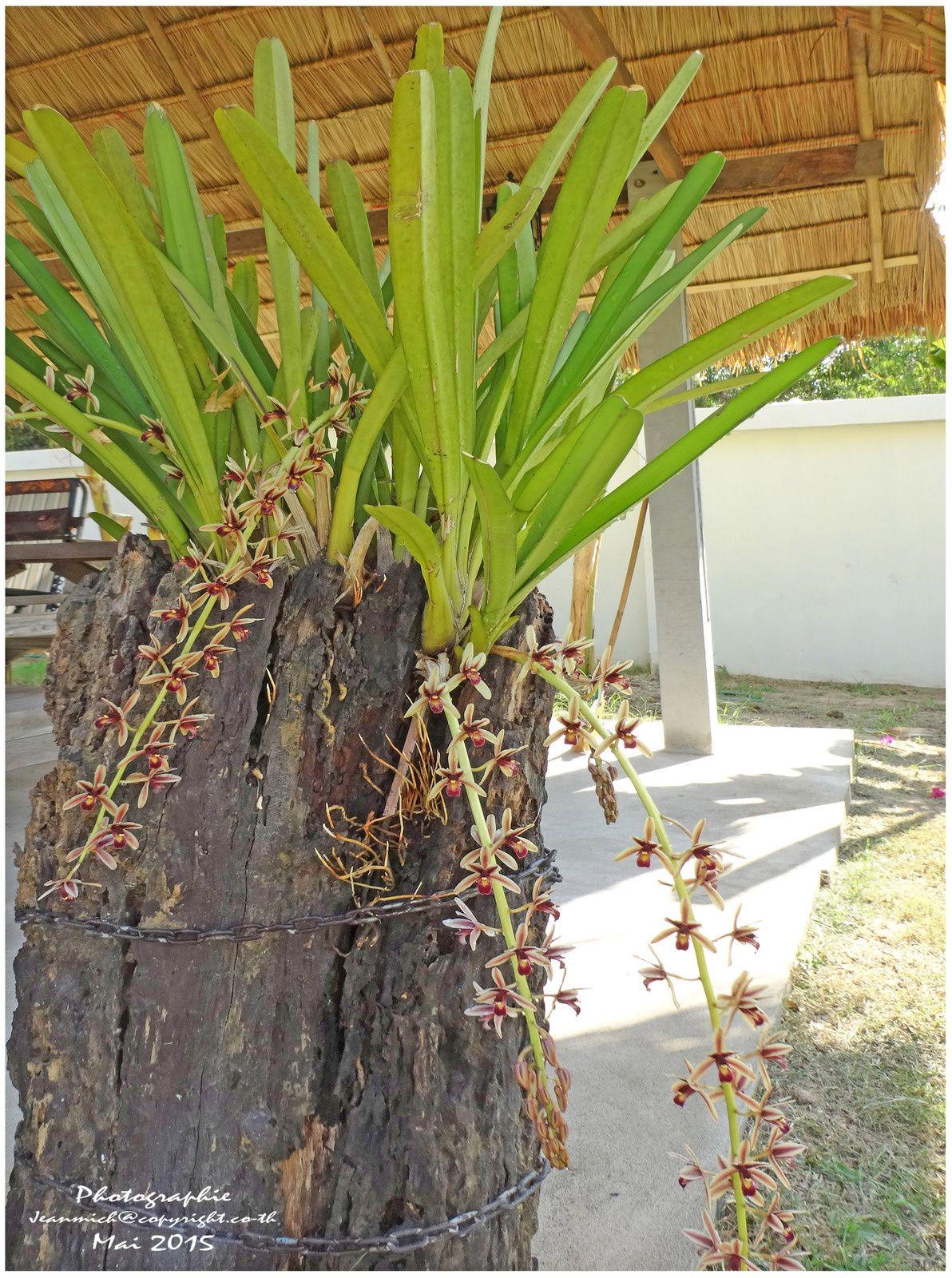 Notre jardin sous les tropiques au mois de mai.