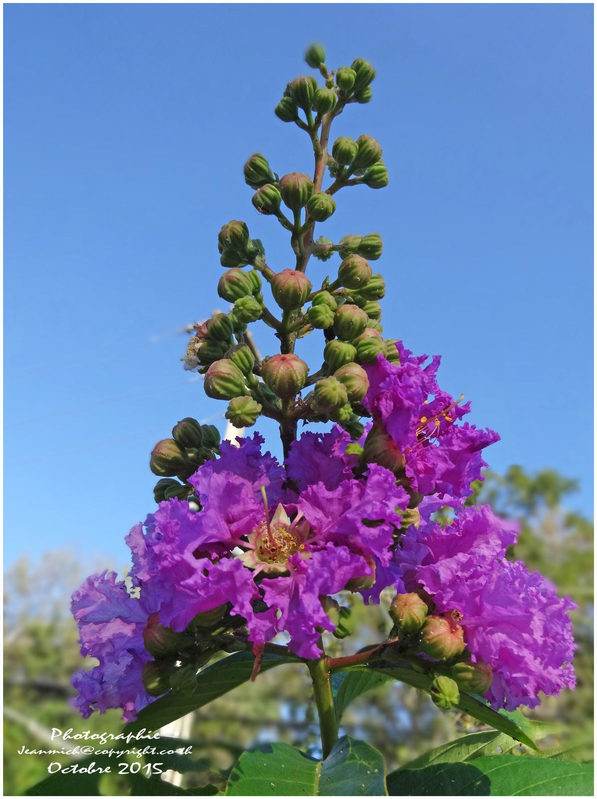 Des fleurs sous le soleil de l'Issan.....