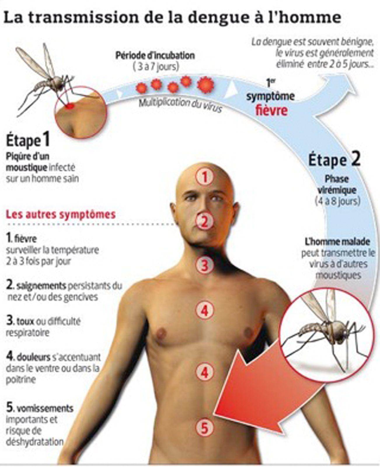 Aux touristes se rendant en Asie du Sud-Est. (La dengue)