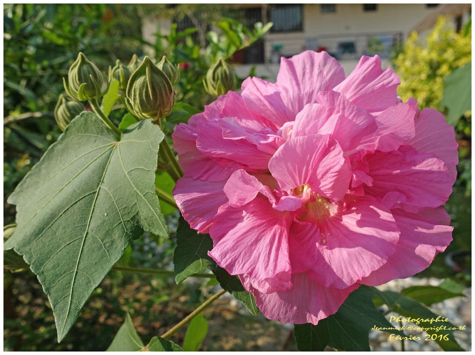 De bien étranges fleurs qui changent de couleur...