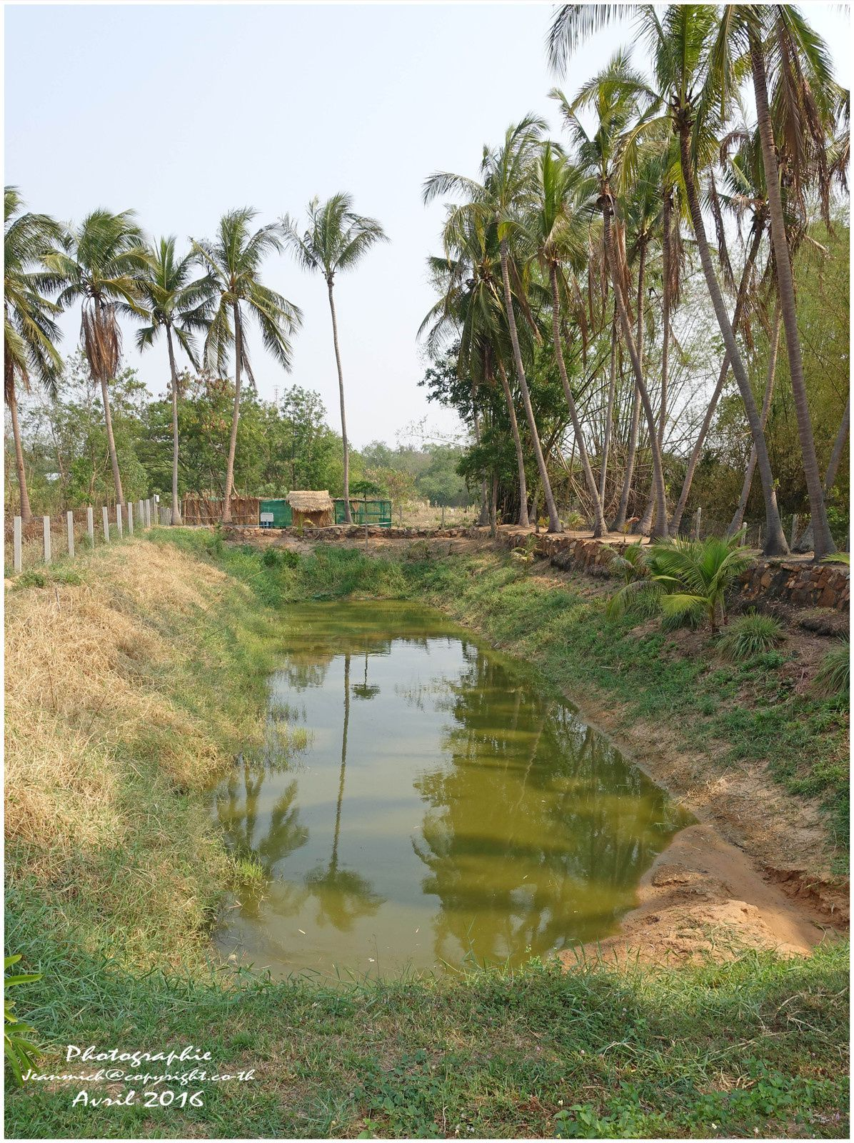L'étang de notre ami Armand, plus beaucoup d'eau pour ses poissons, il manque au moins 2,5 mètres