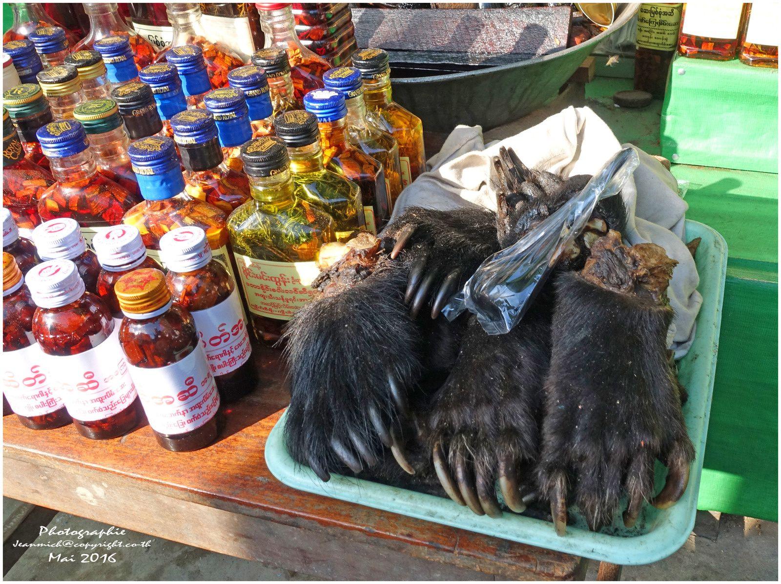 Qui veut des pattes d'ours.... Fraîcheur non garantie.....